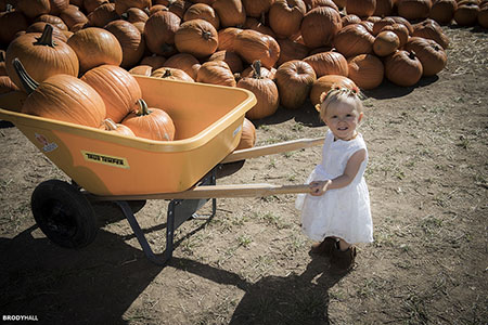 Baby pushing pumpkin cart at Maize in the City, Thornton, CO