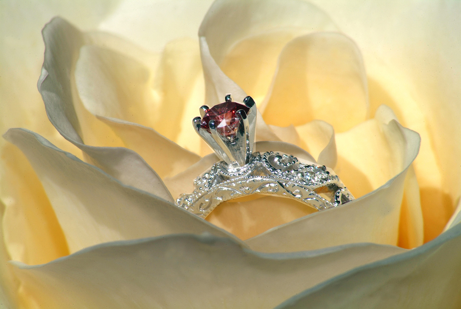 Kylea's Wedding ring in a white rose